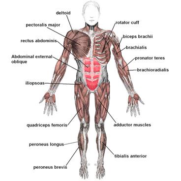 Krop og træning