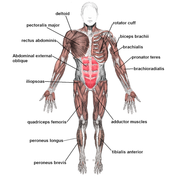 Krop og træning som tema til prøven i idræt.